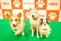 会場には、「わんダント」を装着した モデル犬たちも嬉しそうに走り回っておりました。 小型犬でも負担にならない16グラムという軽さ。