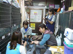 子猫達の世話(排尿排便)1
