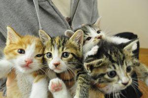 離乳期の子猫達1