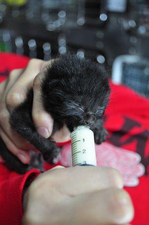子猫のミルク11