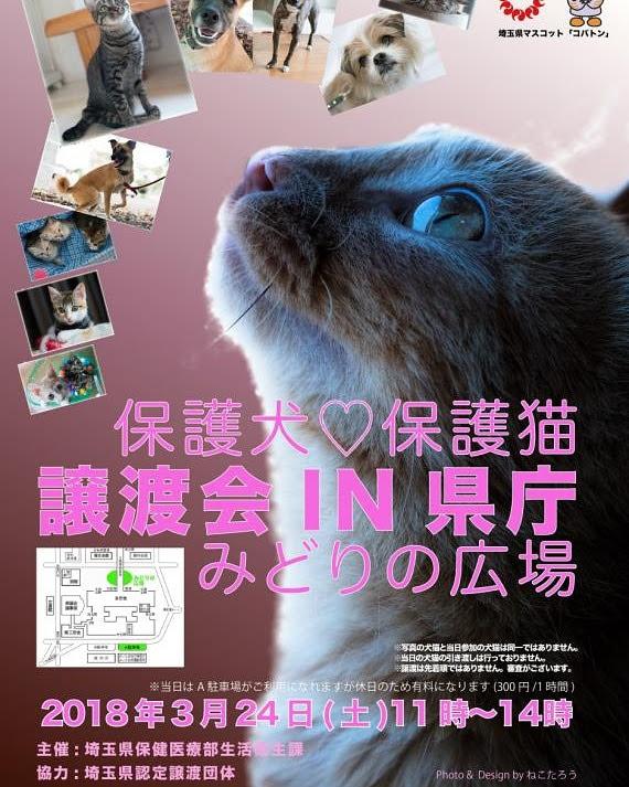 譲渡 保護 会 埼玉 犬