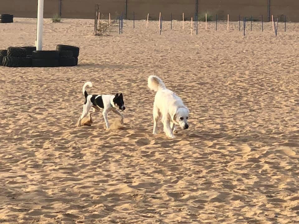 desert dog run