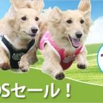 dogsale_banner.jpg