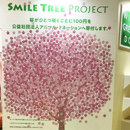smile tree.JPG