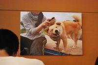 保護団体さんにレスキューされた犬たちの様子は写真で紹介されていました。