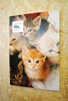 飼い主を募集中の子猫たち。どの子にも幸せになってほしいです。