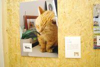 持田 香織さんの飼い猫ちゃん。実家で飼われているそうです。