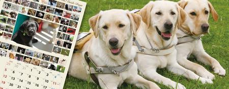 盲導犬カレンダーです。メイン写真は盲導犬になります。