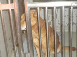 埼玉県動物指導センターよりレスキューされた「さとしくん」と代表の金木さんです。明日は処分と言う日に一命を取り留め方子です。すでに優しいご家庭に譲渡をされて杉並区の静かな住宅街に住んでいます。